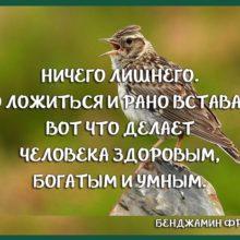 Из совы в жаворонка. Как превратиться в раннюю пташку?